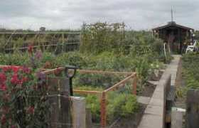 Allotment Guide for July