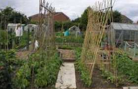 Allotment Guide for June