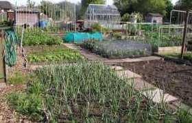 Allotment Guide for May