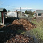 Piles Leaves for Leafmould