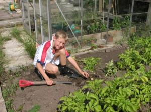 Child Harvesting Potatoes on his mum's plot