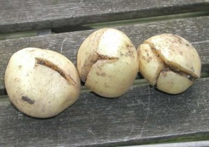 Split Potatoes