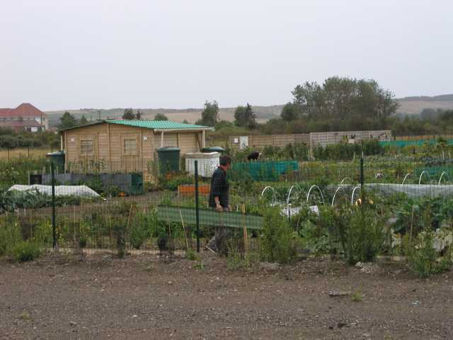 French Allotment 2