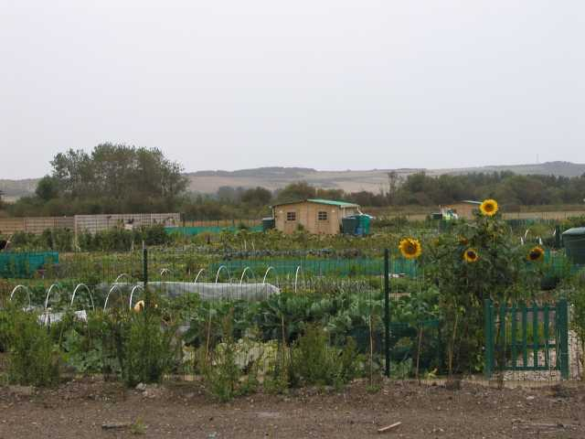 French Allotment 3