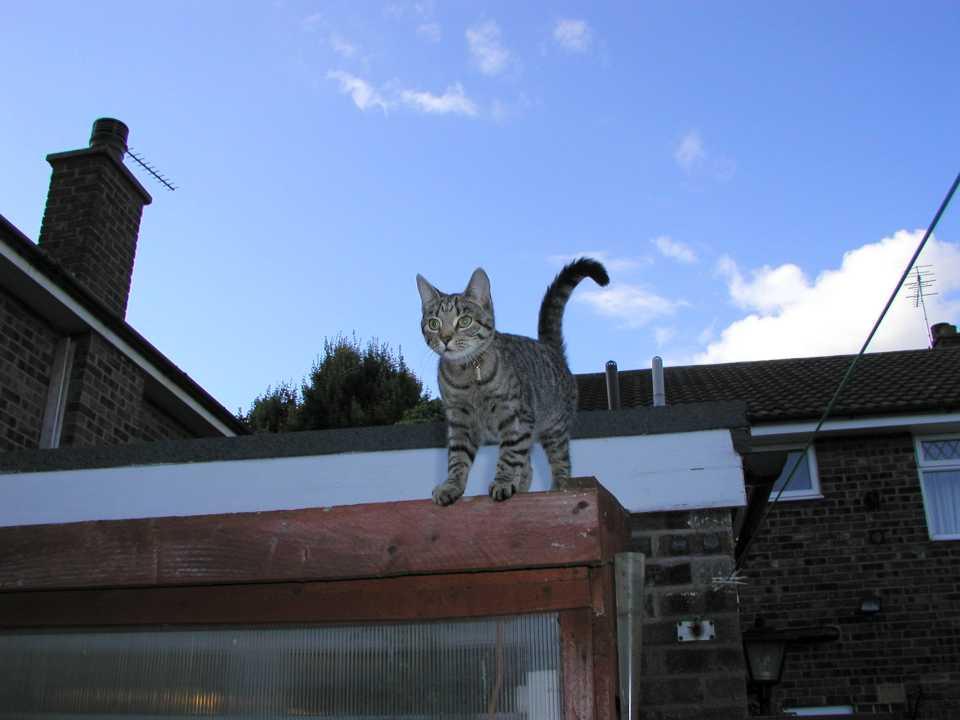 Lottie cat on the greenhouse