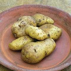 Potato Kifli