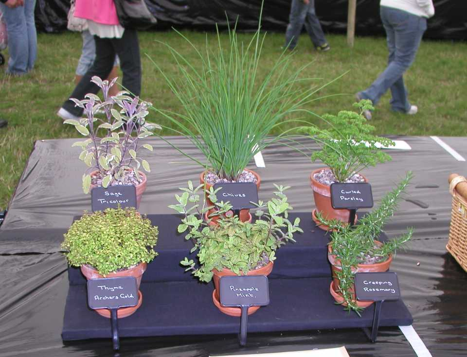 Herb Display