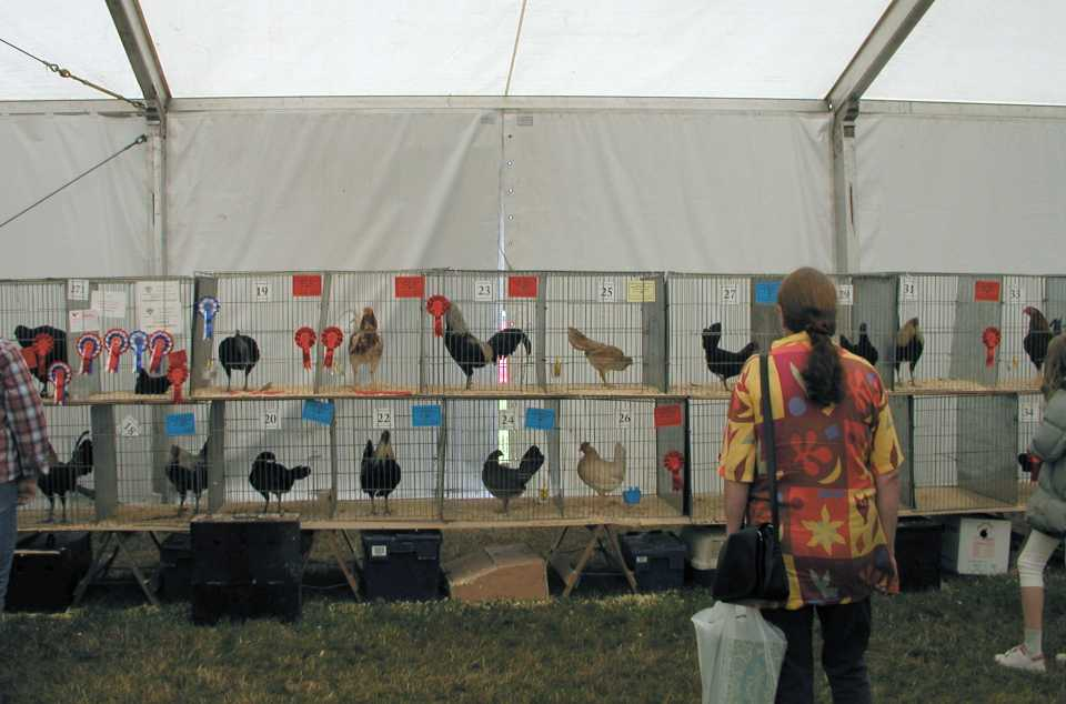 Poultry Tent