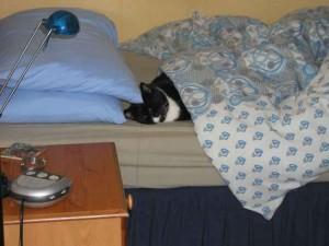 Mr Squeak, our cat
