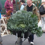 Giant Cabbage - courtesy Grassroots PR