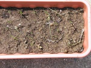 Snail and Leek Seedlings
