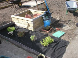 Building Herb Bed