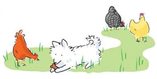 Illustration From Once Upon A Flock