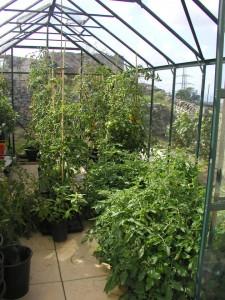 A Full Greenhouse