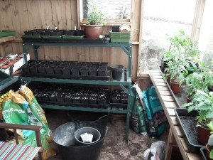 Greenhouse Benching in Potting Shed