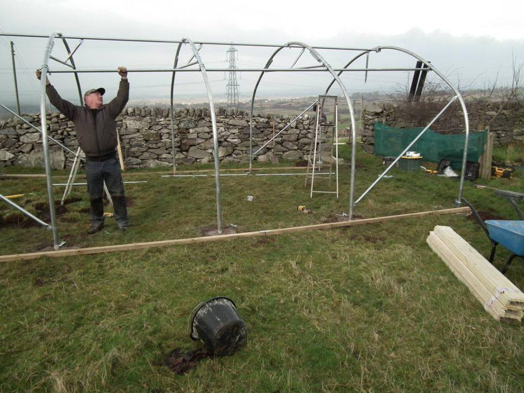 Hoops up on polytunnel frame