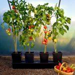 Quadgrow Planter