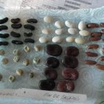 Germination Testing Seeds