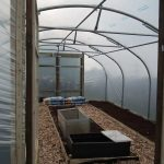 Inside Polytunnel