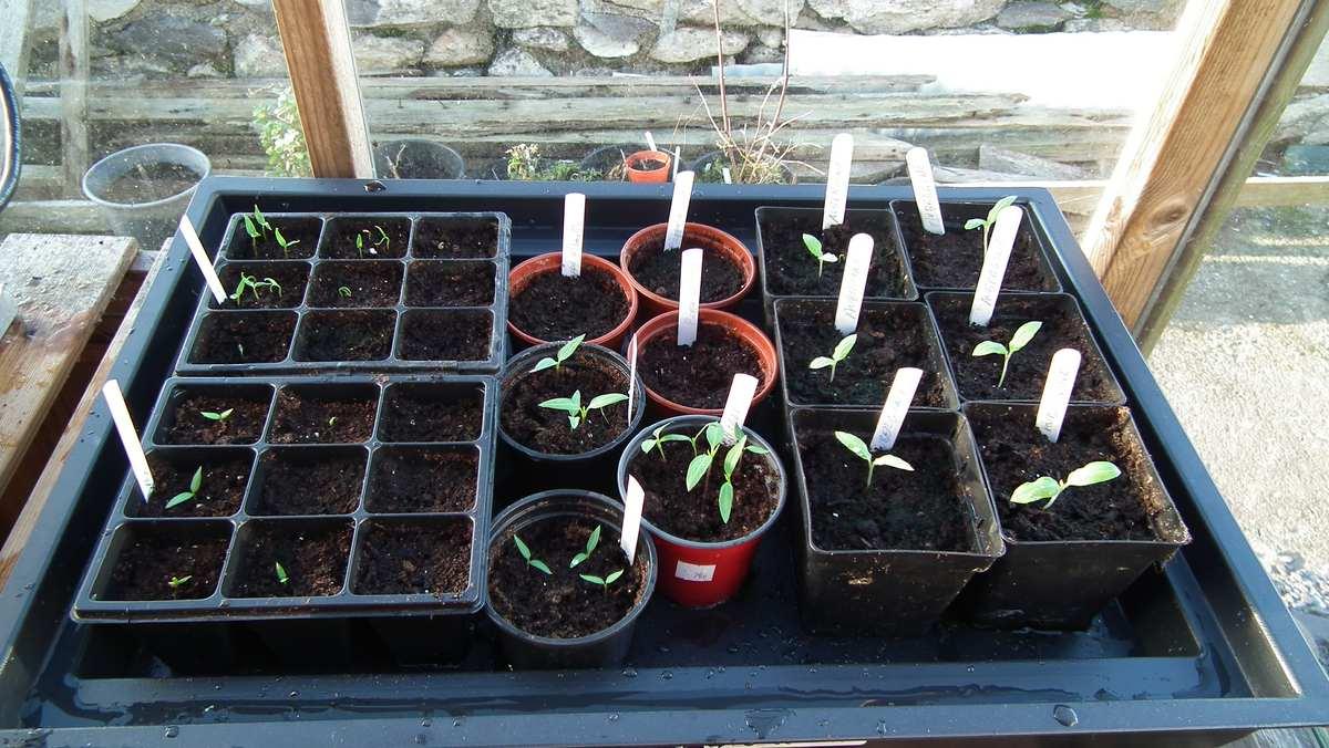 Seedlings in Geopod