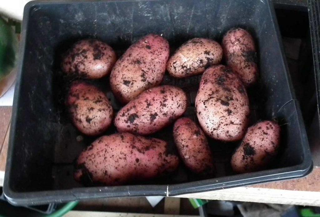 Mystery Potatoes