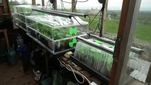 Propagators with Grow Lights