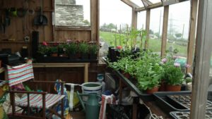 Shed Greenhouse