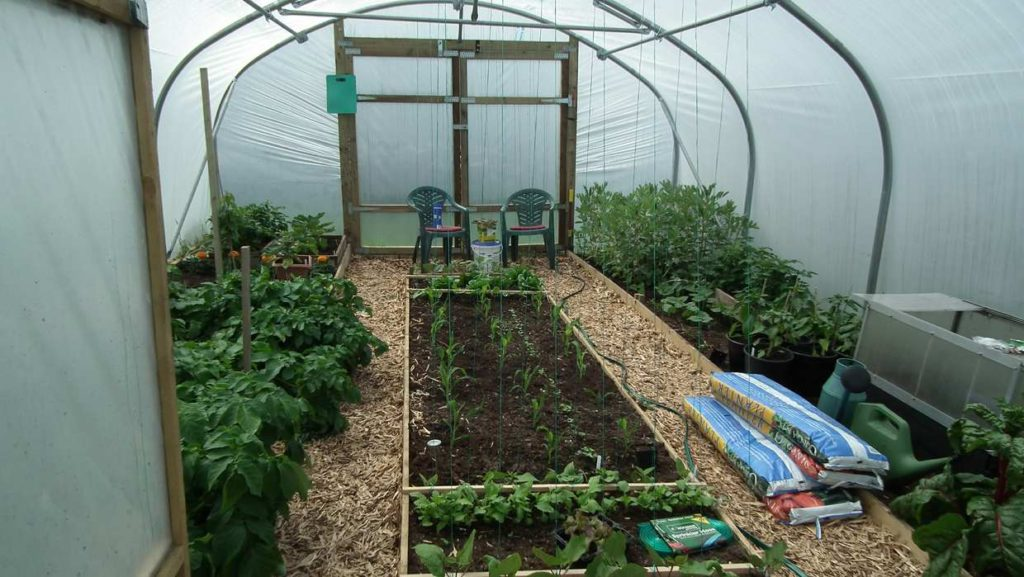 Polytunnel 20 May
