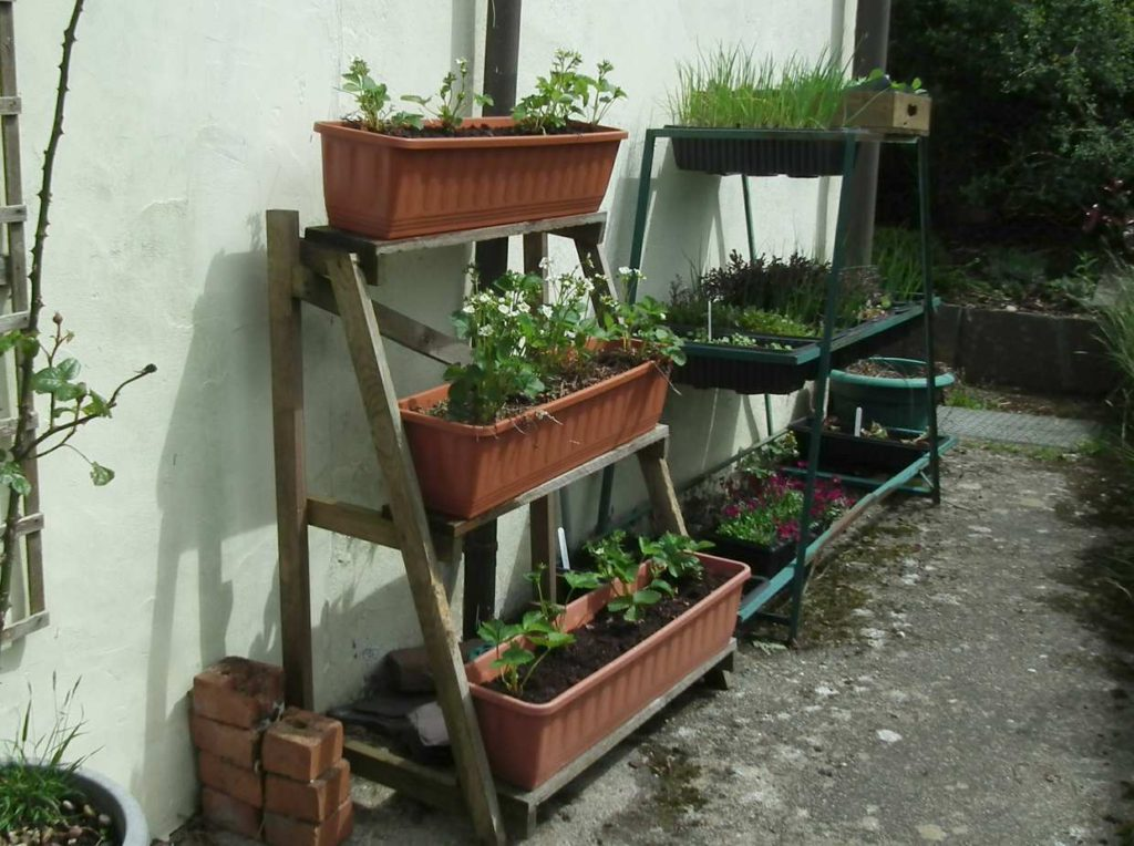 Strawberry Troughs