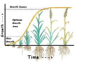 grass growth rates