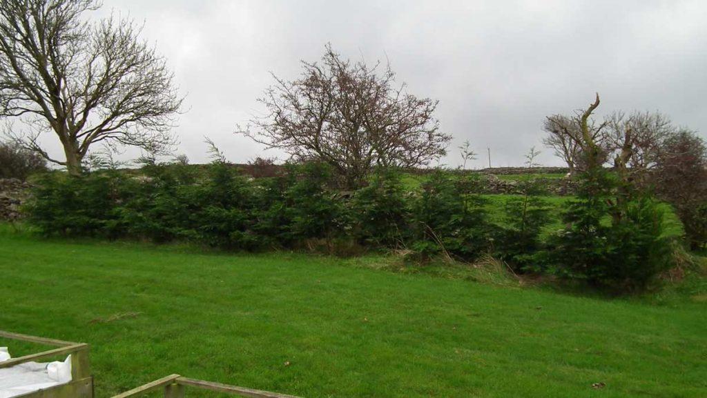Leylandii Windbreak Hedge