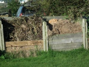 Cat and Compost Heap