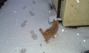 Amber in Snow