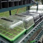 Propagators in Greenhouse