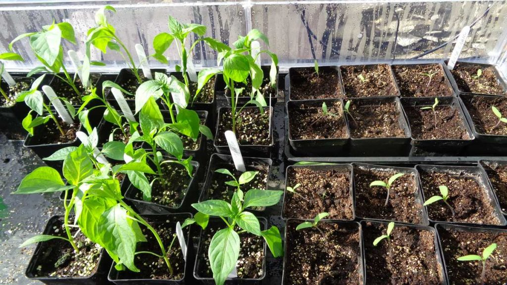 Peppers Tomatoes Vitopod