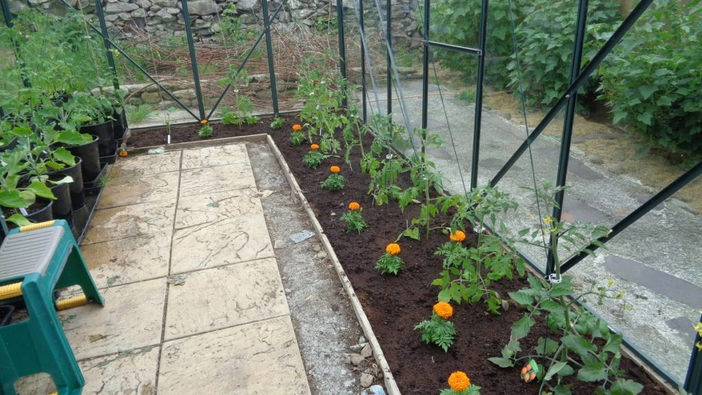 Organised Greenhouse