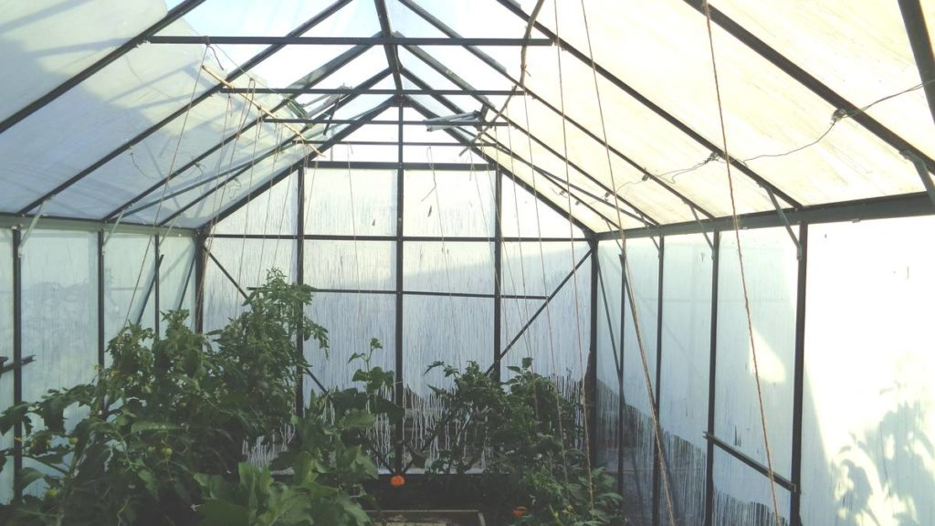 Inside Shaded Greenhouse
