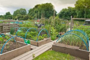 Allotment-Raised-Beds
