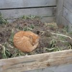 Cat Sleeping on Compost Heap