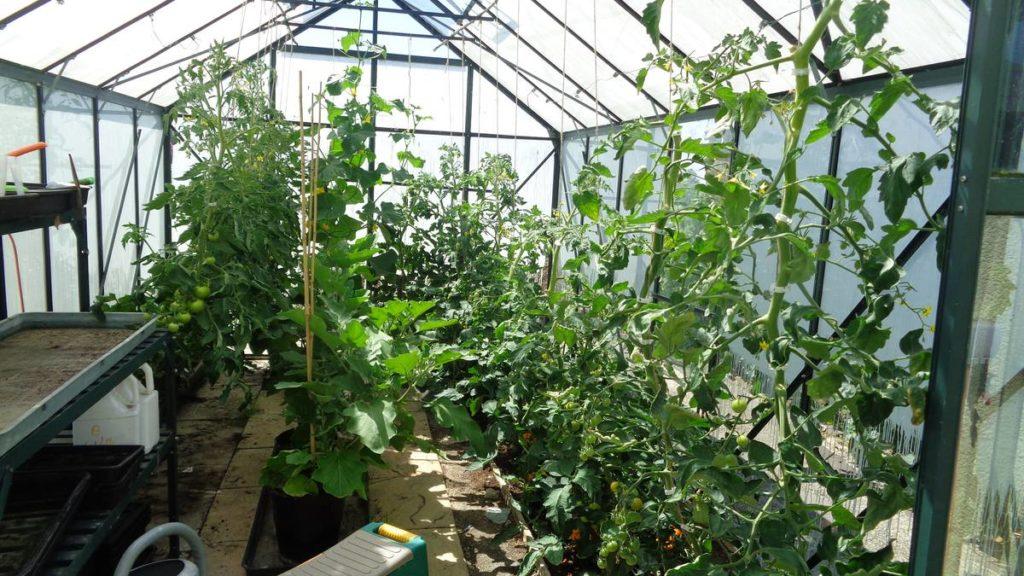 Hot Greenhouse