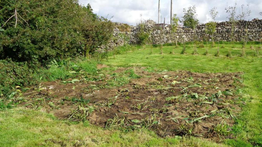 Comfrey Bed After Cutting