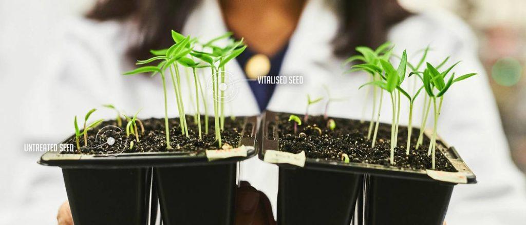 Optigrow seeds comparison