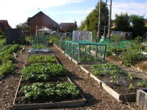 Allotment Raised No-Dig Beds