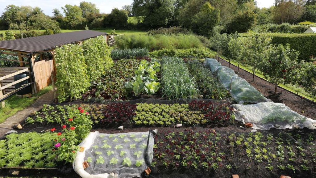 Charles Dowding Garden