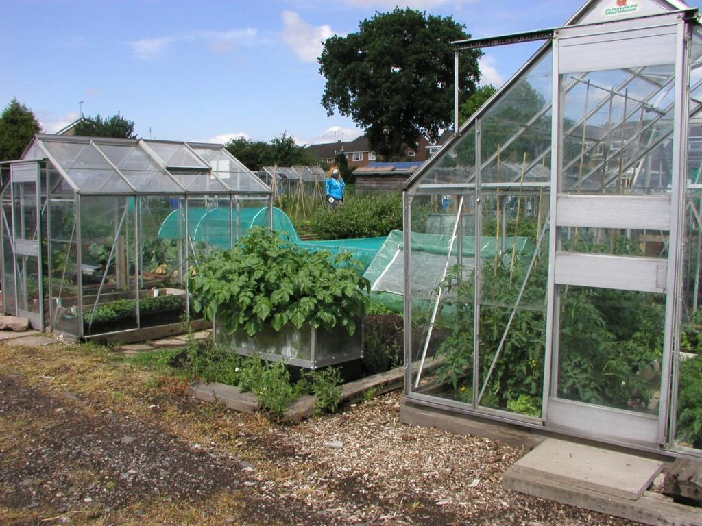 Greenhouses on Allotments