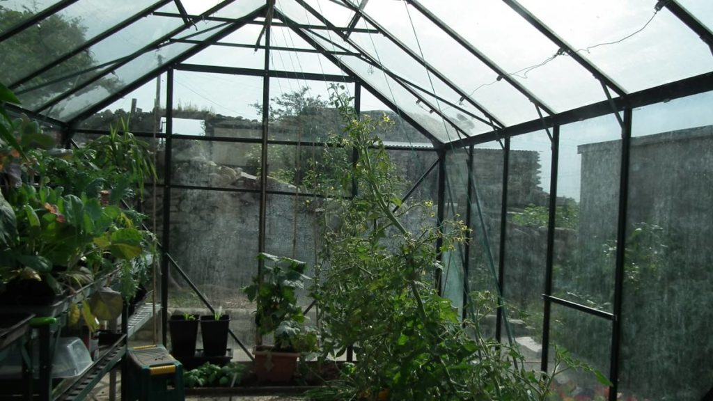 Border Tomatoes