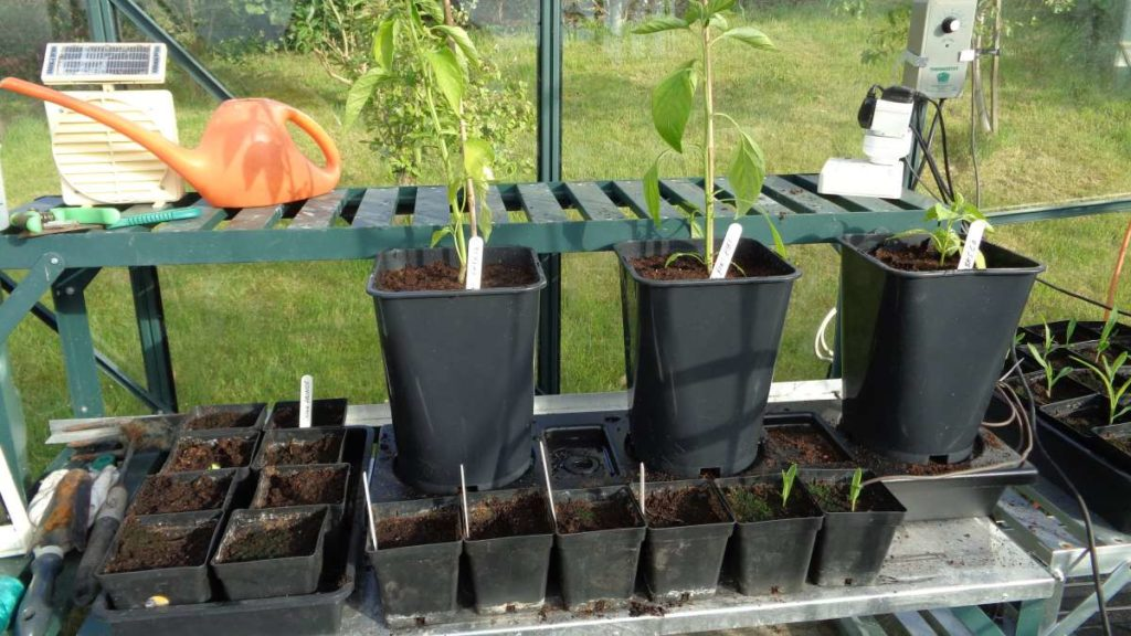 Chilligrow Greenhouse