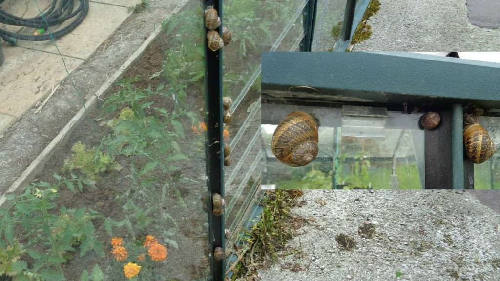 Snails on Greenhouse