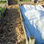 Woodchip Path Between Raised Beds