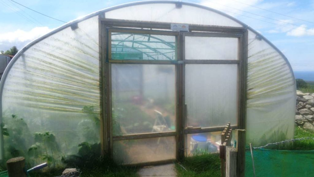 Netting Panel in Polytunnel Door